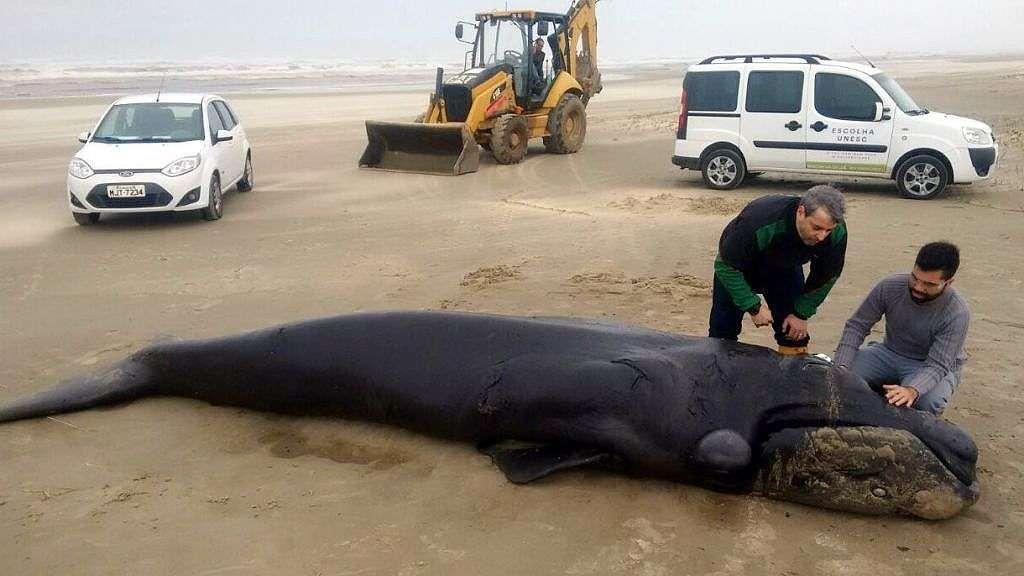 baleia-franca-unesc (1)