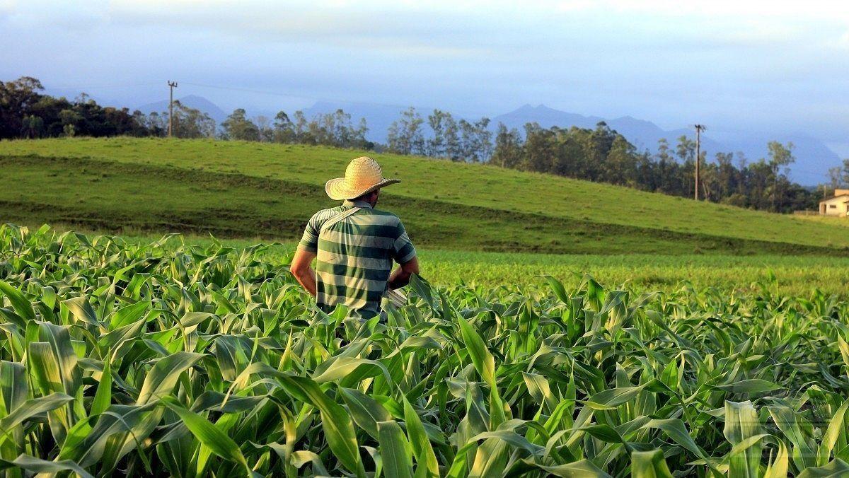 agricultura agricultor agronegocio milho