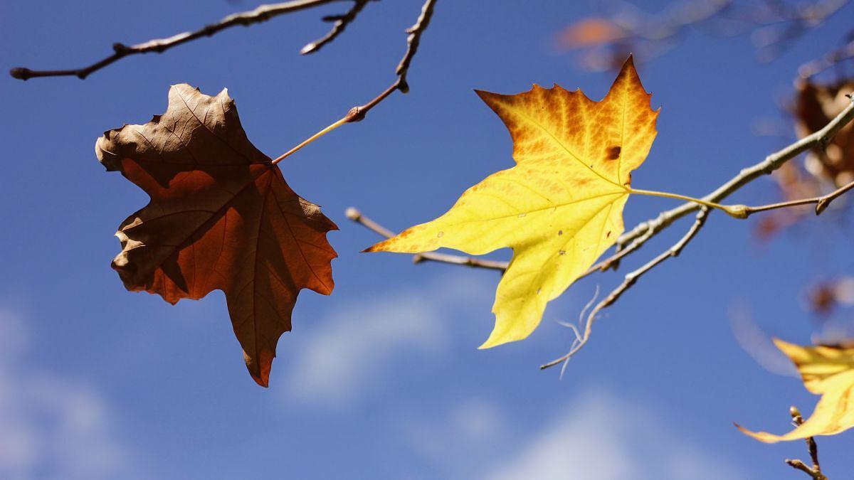frio inverno outono