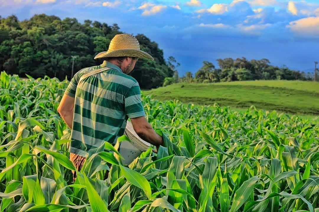 Agricultura, agricultor, milho, plantação, agronegócio