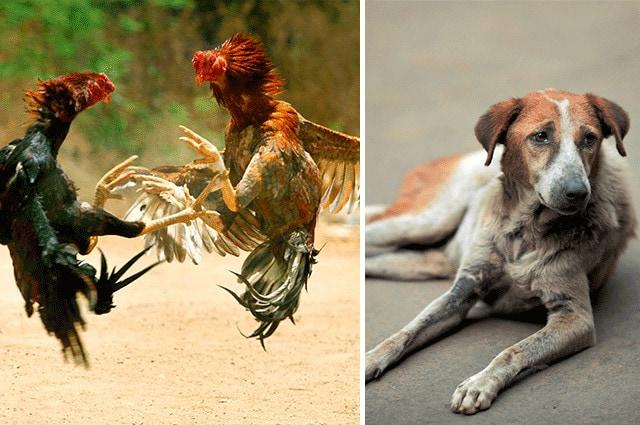 Maus-tratos animais